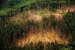 Ranní klub v červnu s tématem Budoucnost lesů na Jesenicku